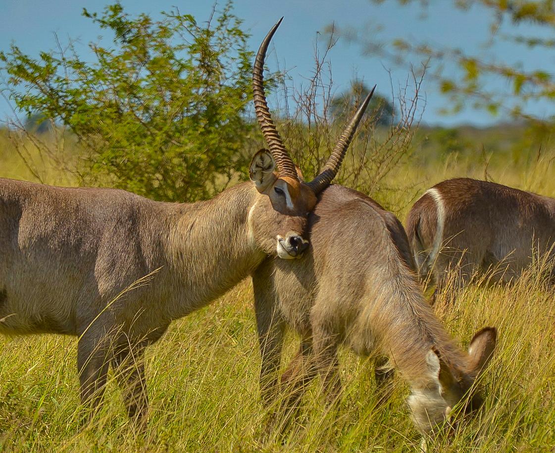al Kruger Park