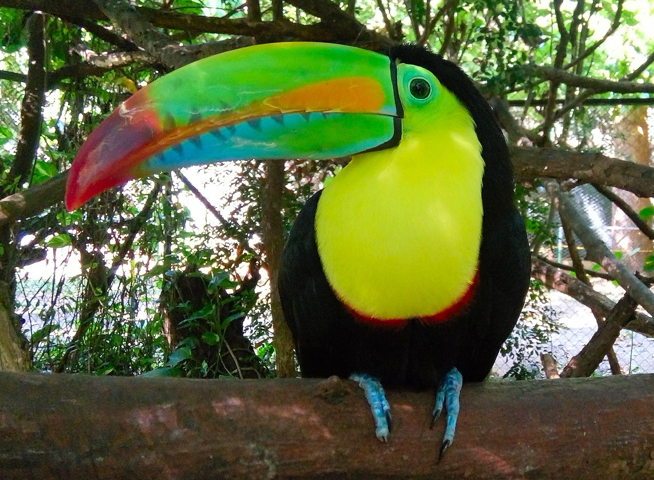 Costa Rica - tucano