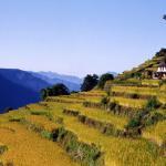 risaie - Nepal